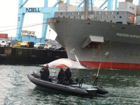 Maersk ballena